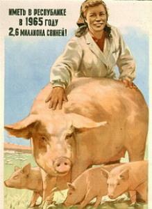 Иметь в республике в 1965 году 2.6 миллиона свиней.