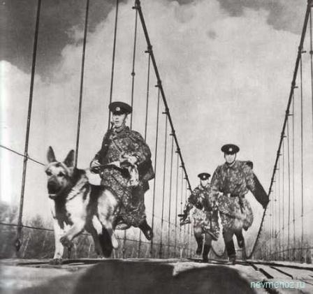 Порганичники с собакой на мосту.